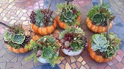Succulent Crafts with Pumpkins