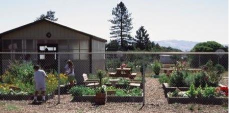 schoolgarden2