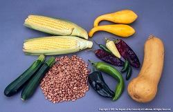 corn, beans, squash, chilis