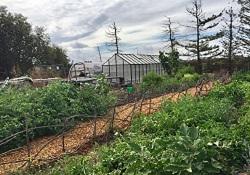 Sue's garden 5 250p