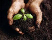Soil with plant