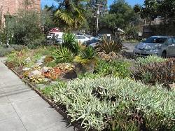 Sonoma Waterwise Garden - East succulent garden
