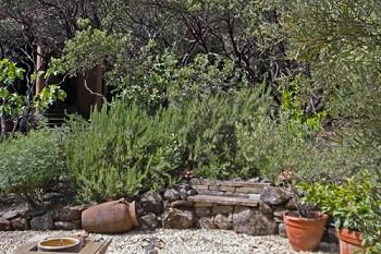 tagetes, lemons, fig, olive, rosemary, lavender