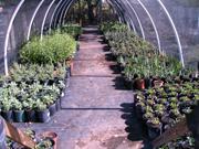ji greenhouse 3