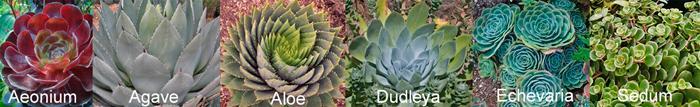 succulentbanner